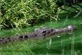 Krokodil, Backwaters