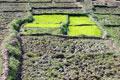 Reisfelder, Hampi